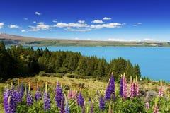 Lake Pukaki in spring Stock Photos