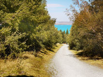 Lake Pukaki Trail, New Zealand. Bush and Lake Pukaki Trail. South Island, New Zealand stock photography