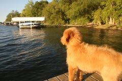 Lake Puppy Stock Photos