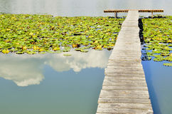 Lake, quay and water lilies Royalty Free Stock Photo