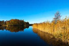Lake with reedbed in autumn landscape Royalty Free Stock Photos