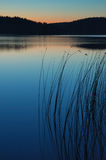 Lake with reeds. Lake with reeds at night Royalty Free Stock Photo