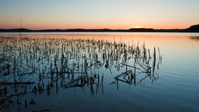 Lake with Reeds royalty free stock image