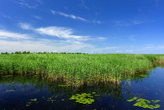 Lake, reeds, blue sky Stock Photos