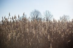 Lake with a reeds in the foreground.  Royalty Free Stock Photos
