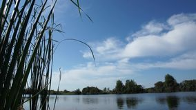 Lake. With reeds in the foreground stock video