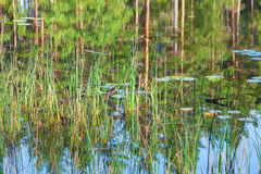 Lake with reeds and reflections in the water Royalty Free Stock Photos
