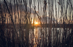 The lake and the reeds in the setting sun Royalty Free Stock Photos