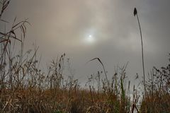 Lake reeds shrouded in fog. In winter Royalty Free Stock Photo