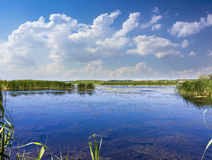 Lake with reeds and water lilies Royalty Free Stock Images