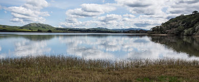 Lake reflecting clouds in the green hills of wine country Royalty Free Stock Images