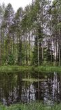 A lake reflecting the trees in the middle of the forest Stock Photo