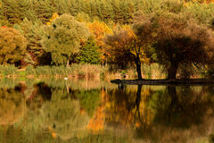 Lake reflection with fall color Royalty Free Stock Photography