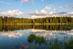 Lake reflection forest Royalty Free Stock Photography