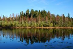 Lake with reflection of forest. With blue sky in late autumn. Lake name: `Katinėlis` Kitty royalty free stock photo