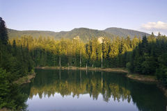 Lake reflection of a forest at sunset. The forest reflecting in the Dragan Lake, at sunset Royalty Free Stock Photography