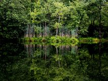 Lake. Reflection in the lake, green shrubs and trees Stock Images