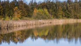 Lake with reflection of trees in the autumn Royalty Free Stock Photography