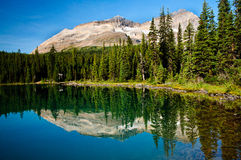 Lake reflection, Vancouver Island Stock Photo