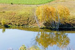 The lake reflection the White Birch Royalty Free Stock Images
