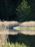 Lake Reflections. Reflecting lake in the summertime in Finland Royalty Free Stock Images