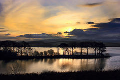 Lake Reflections - Cumbria UK. Tall trees growing on a narrow island are reflected in a lake at dawn Stock Photography