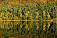 The Lake reflections of fall foliage. Colorful autumn foliage casts its reflection on the calm water. Lake reflections of fall foliage. Colorful autumn foliage Stock Images