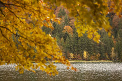 Lake reflections of fall foliage. Colorful autumn foliage casts royalty free stock images