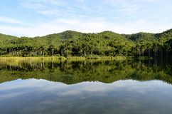 Lake reflections in Las Terrazas (Pinar del Rio, Cuba). Lake reflection of the forest and the mountains in Las Terrazas Unesco Biosphere Reserve (Pinar del Rio Stock Photo