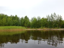 A lake that reflects the forest. Severodvinsk, Russia 2015 royalty free stock photos