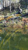 Lake regrowth. The regrowth after a large fire one year later on a clear Lake Stock Photo