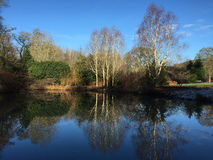 Lake at RHS Rosemoor. RHS Rosemoor on a frosty sunny morning Royalty Free Stock Photography
