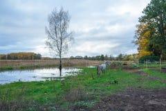 Lake in Riga, district Jugla. Autumn, yellow tree leaves, lake, Royalty Free Stock Photo