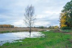 Lake in Riga, district Jugla. Autumn, yellow tree leaves, lake, Stock Photos
