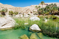 Lake, river and grass in the desert oasis - Oman. Palm tree oasis view Royalty Free Stock Photos
