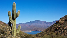 Lake Roosevelt. View of saguaro cactus and Arizona\'s Lake Roosevelt Stock Image
