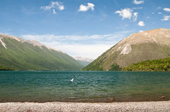 Lake Rotoiti Stock Photography