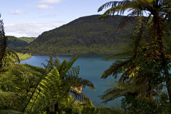 Lake Rotokakahi (Green Lake), Rotorua, New Zealand Stock Photos