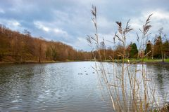 Lake with Rushes Royalty Free Stock Photography