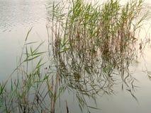 lake& x27; s-kust Arkivfoton