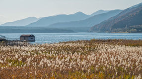 Lake Saiko with grass field Stock Images