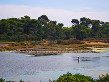 lake on Saint Margarita island occupied by a great number of waterfowl royalty free stock images