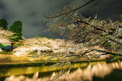Lake with sakura cherry in kyoto Royalty Free Stock Photography