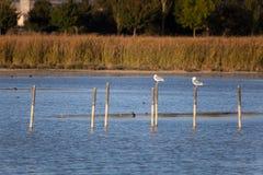 Lake of Salburua, Vitoria Royalty Free Stock Image