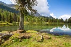 Lake San Pellegrino, Dolomites, Italy. Lake San Pellegrino during hot summer season, Dolomites, Italy Stock Photo
