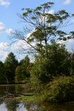 Lake scene Royalty Free Stock Images