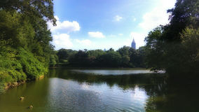 Lake Scene with Trees. This lake is located at a public park in Atlanta, GA, Piedmont Park. The lake is surrounded by trees with the city skyline in the Royalty Free Stock Photography