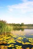 Lake scenery. Beautiful and peaceful lake Pogoria (Poland Stock Photo