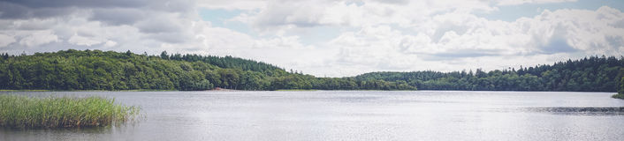 Lake scenery by a green forest Royalty Free Stock Image