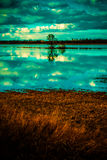 Lake scenery and lonely tree Stock Images